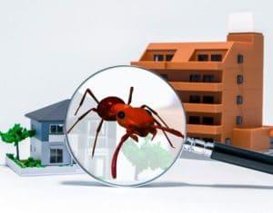 firmalara haşere böcek risk analizi oluşturuyoruz