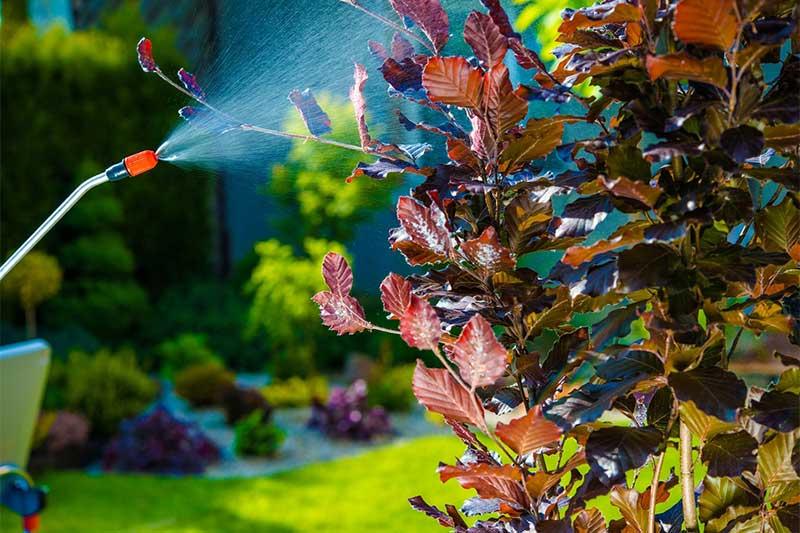 Bahçe haşere ilaçlama