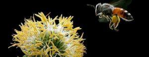 pestisitlerin haşere ilaçlarının zararları